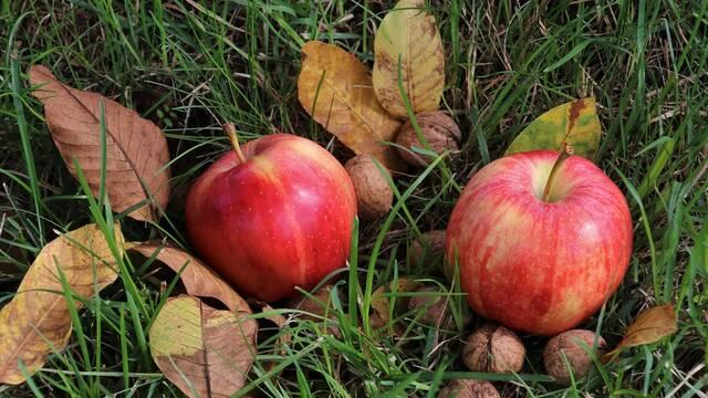 Festa de la poma